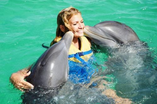 D tente et activit s sur une belle plage de cuba en famille - Nager avec les dauphins en piscine ...